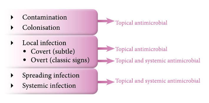 Figure 2. Continuum of infection.